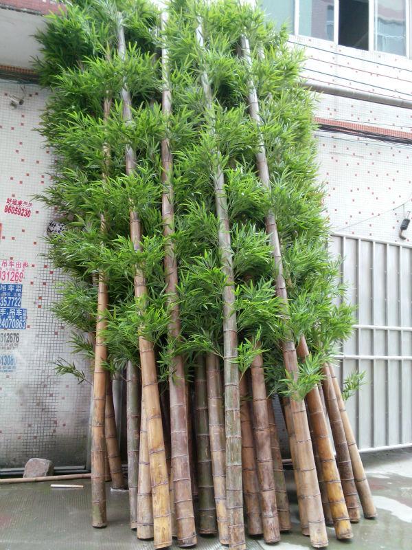 Garden Design Garden Design with Hardy Bamboo Palm Chamaedorea