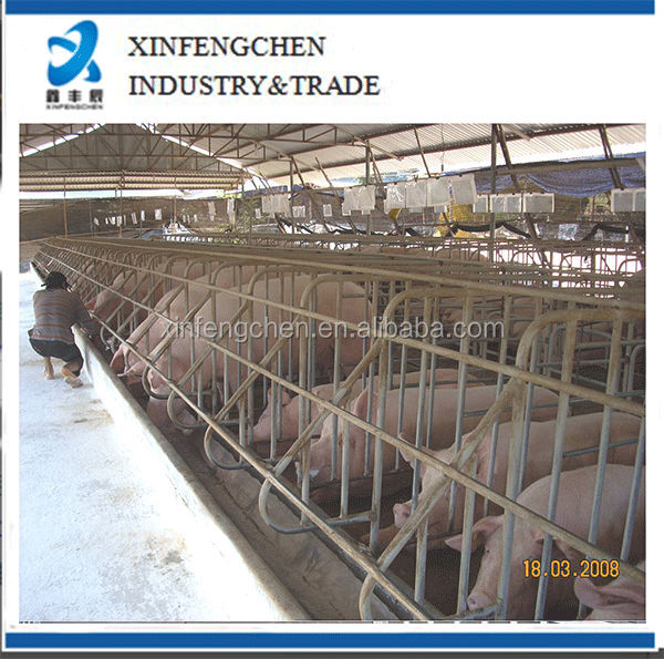 Pig-Breeding-Development-Program