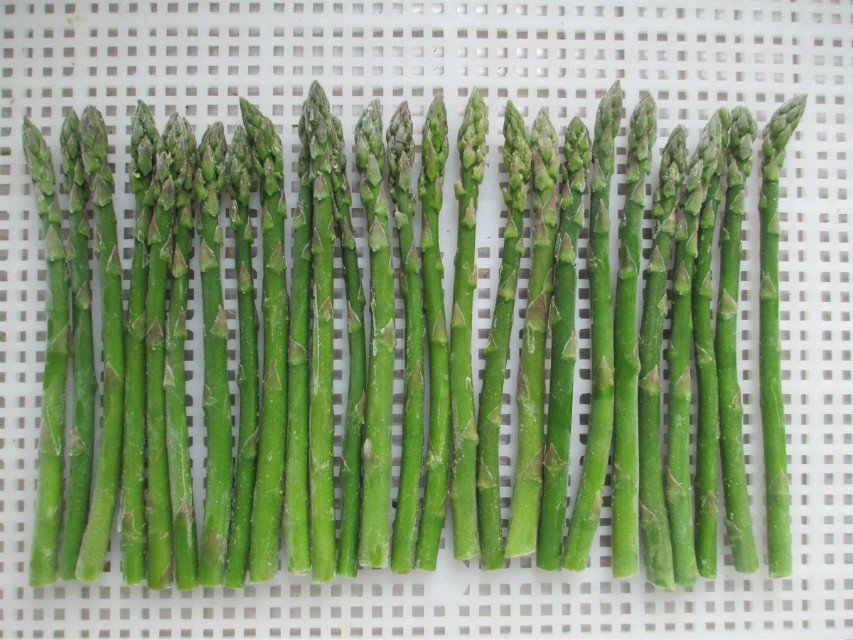 IQF & Frozen green bean price