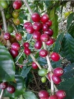 Зерновое кофе New , 454
