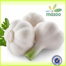 Granulated garlic/ Aged garlic