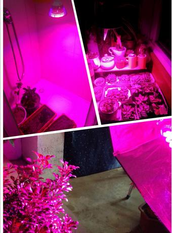 뜨거운 판매 15w 인거 주도 공장은 빛을 성장 성장 패널 12w LED ...