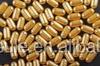 gelatin medicinal vacant hard capsule A