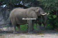 Safaris In Namibia