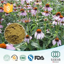 GMP factory supplied 100% pure Natural echinacea purpurea extract 4% polyphnols and 2% chicoric acid for medicine suppliers