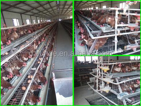 chicken cage 3.jpg