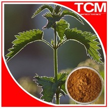 100% Natural Nettle 10:1 extract/P.E powder/Nettle glucoside/ascorbate/acetylcholine/sitosterol