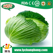 [Hot Sale] Cabbage/red cabbage