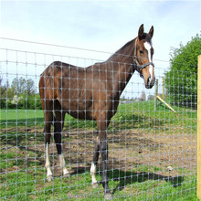 Farm fence Field fence Cattle fence for breeding horses