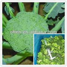 supply grade A frozen fresh broccoli florets