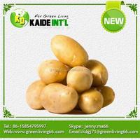 Buy Large Quantity Potato