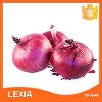 Wholesale Onion From China