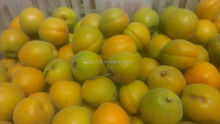 China supply IQF apricot halves/dices unblanced/unblanced high quality price