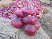 Supplier of Fresh Red Onion from India Fresh Onion Shallots