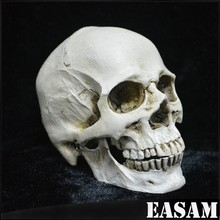 Halloween skull props, haunted house bar room escape the scary decorations, resin small skull
