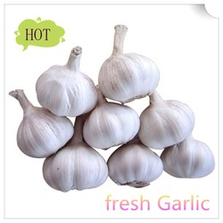 2015 new crop fresh garlic for sale/China garlic