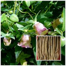 Herbal medicine dang shen radix codonopsis pilosulae extract powder