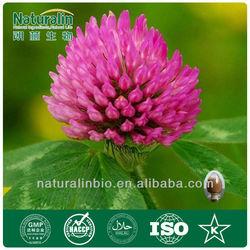 Organic Red Clover Extract Powder 2.5% Isoflavones