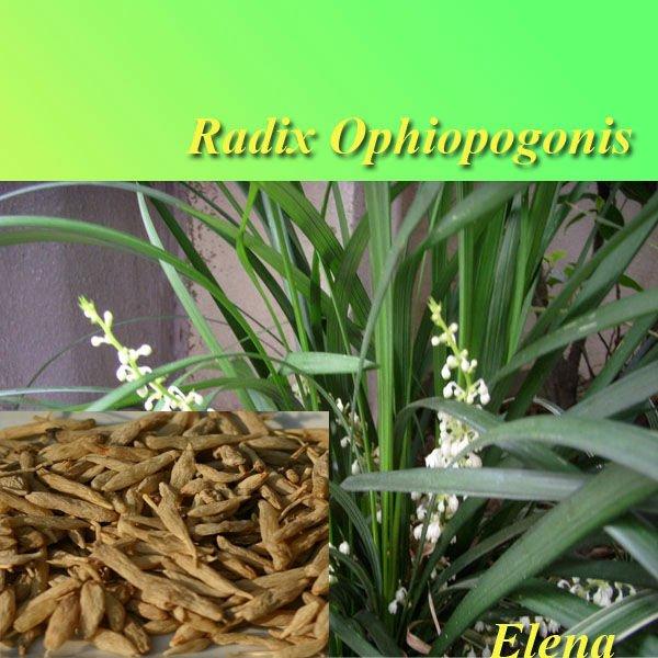 Ophiopogonis Radix Wirkung