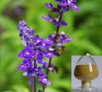 Manufacturer sppply chinese sage extract