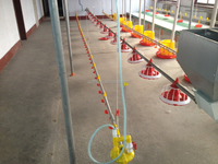 Automatic poultry feeder line for chicken house broilers