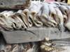 BEST QUALITY Frozen seafood Argentina Illex Squid Tube