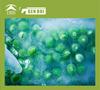 Frozen green peas dry green pea dry green pea