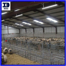 steel cattle shed