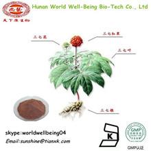 Panax Notoginseng Powder Notoginseng Triterpenes / Saponins Powder Notoginseng 3% 30% Free sample / Notoginseng Powder