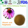 echinacea extract 4% polyphenol and 1% chicoric acid for cosmetic