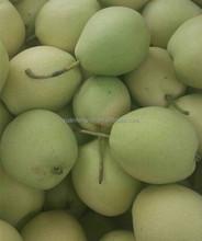 2015 crop fresh shandong pear