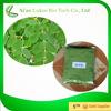 /product-gs/moringa-extract-natural-moringa-leaf-powder-moringa-leaf-powder-buyers-60275567536.html