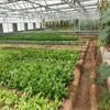 trade assurance walk in green house/walk in greenhouse/tunnel garden greenhouse