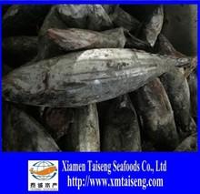 1.3kg up Katsuwonus Pelamis Frozen Skip Jack Tuna