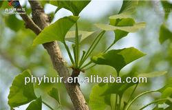 High quality ginkgo flavone glycosides 24%6%,ginkgo flavone glycosides,ginkgo flavone glycosides