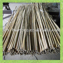 The nursery bamboo, nursery bamboo cane, nursery bamboo stick for sale