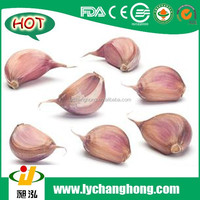 Normal White Garlic with size 4.5cm and 20kg/mesh bag CNF Karachi Price