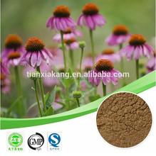 echinacea purpurea plant extract Cichoric acidechinacea extract 4% polyphenol Cichoric acid echinacea extract Cichoric acid
