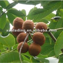Horse Chestnut Extract Powder Escin