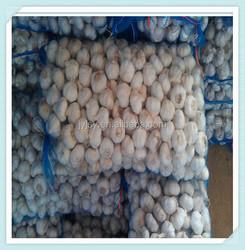 normal white garlic Newest crop