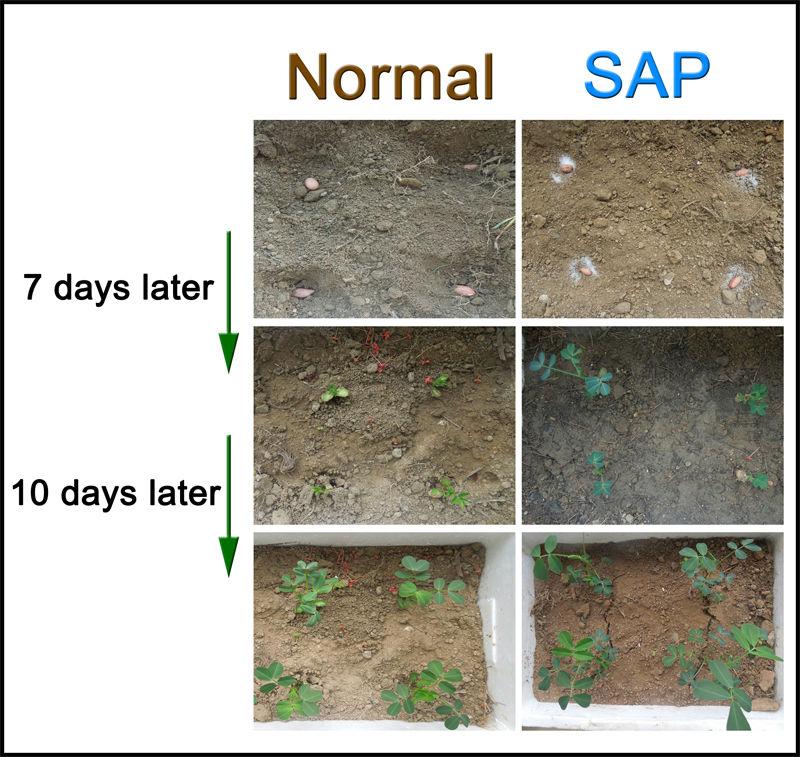 Potassium based SAP, good water retaining agent