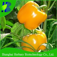Hybird pepper seeds, bell pepper seeds price