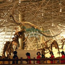 Plastic Skeleton Model from Baurutitan Dinosaur Factory