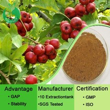 Hawthorn Extract/Hawthorn Berry Extract/Hawthorn Leaf Extract