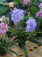 wholesale potted decorative Artificial/fake plants onion orchid bonsai for decoration