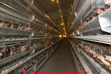 Best-selling full automatic chicken supplier poultry equipment
