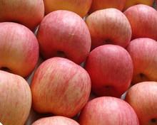 Apple/Mangoes/Orange/Lemon/Cherries/Grape/Carrot/Pineapple/Avocado/Coconut/Melon/Citrus Fruit