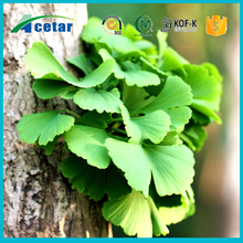 Improve immunity Ginkgo Biloba Leaf Extract Powder/Ginkgo Biloba Extract