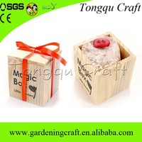 indoor ornamental plants custom message bean for advertising gifts