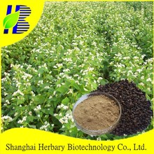GMP factory supply Tartary Buckwheat extract / Fagopyrum tararicum P.E.